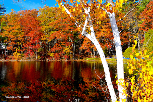 ======================-BIRCH-AND-FOLIAGE-WATER-REFLECTION-1=========================================================================================================================================-BIRCH-AND-FOLIAGE-WATER-REFLECTION-1