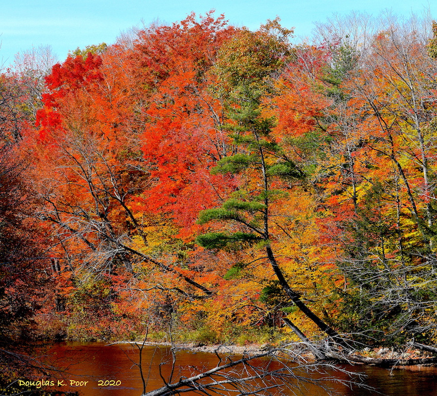 -FOLIAGE-AND-REFLECTION-INTO-SWIFT-RIVER====================-FOLIAGE-AND-REFLECTION-INTO-SWIFT-RIVER