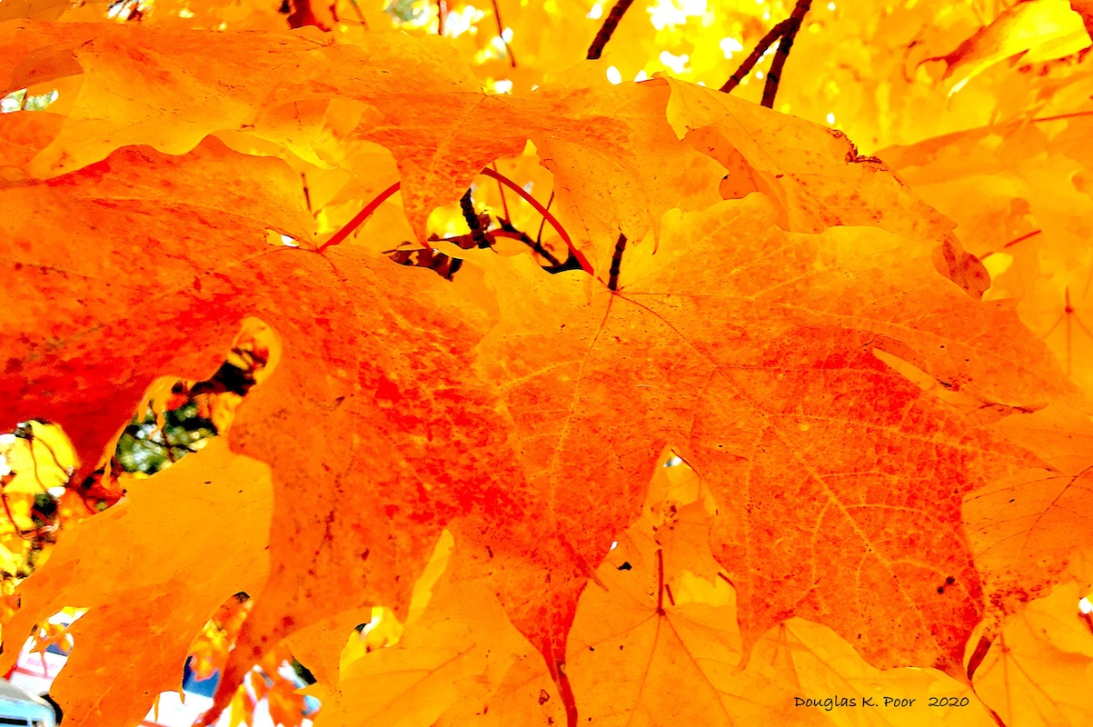 YELLOW-AND-ORANGE-LEAVES-CLOSE====================YELLOW-AND-ORANGE-LEAVES-CLOSE