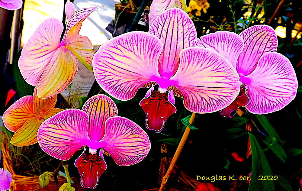 ==========================================================================================================================YELLOW-AND-PURPLE-ORCHIDS==========