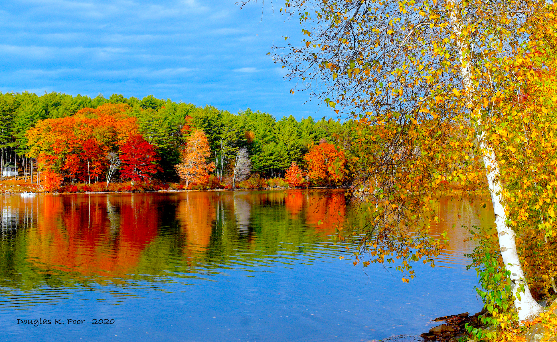 ==============-BIRCH-AND-FOLIAGE-WATER-REFLECTION-6==========================================================================================================================BIRCH-AND-FOLIAGE-WATER-REFLECTION-6
