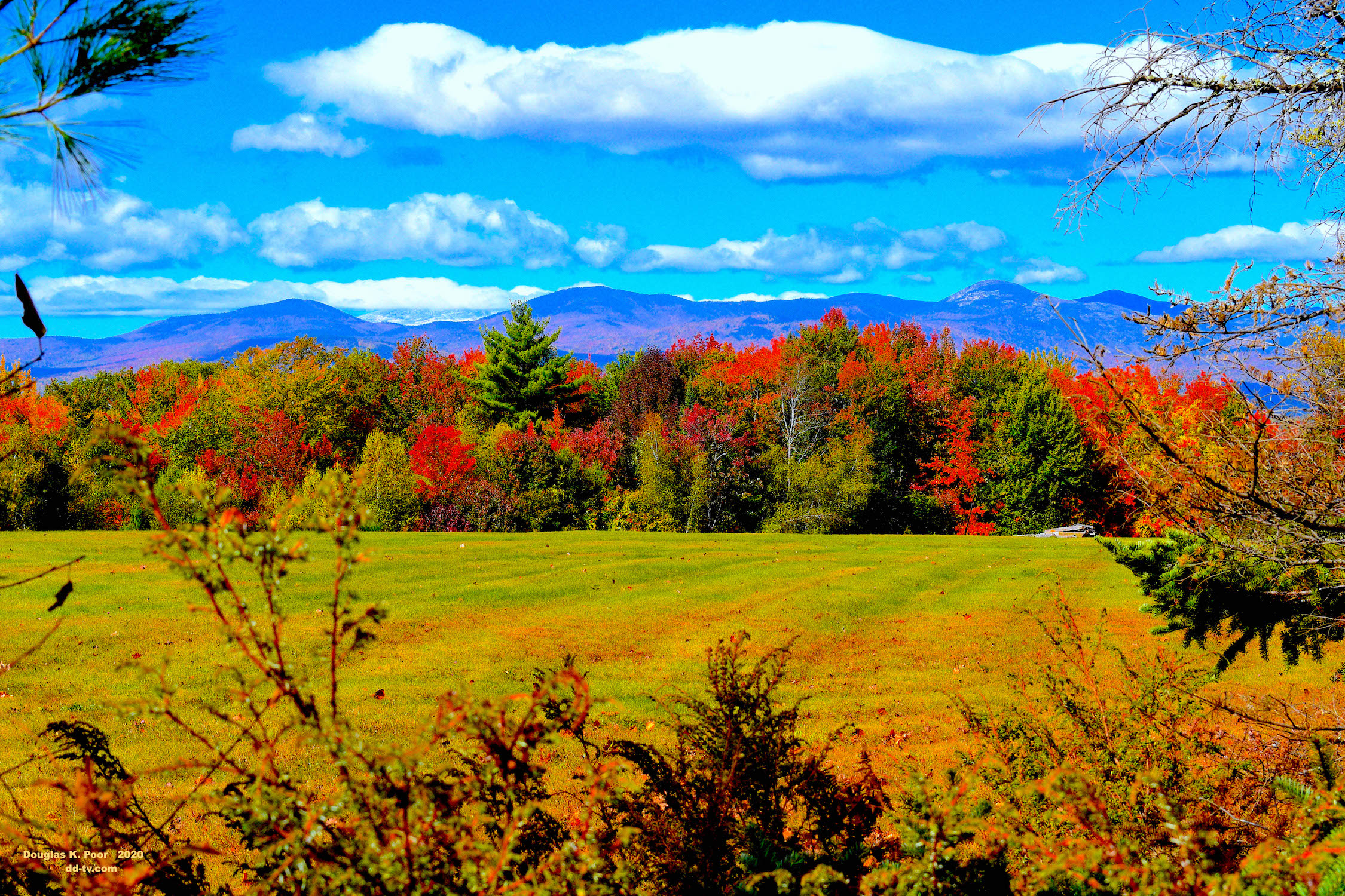===============BUSHES-FIELD-FOLIAGE AND-MTNS========================================================================================================================================================================BUSHES-FIELD-FOLIAGE AND-MTNS