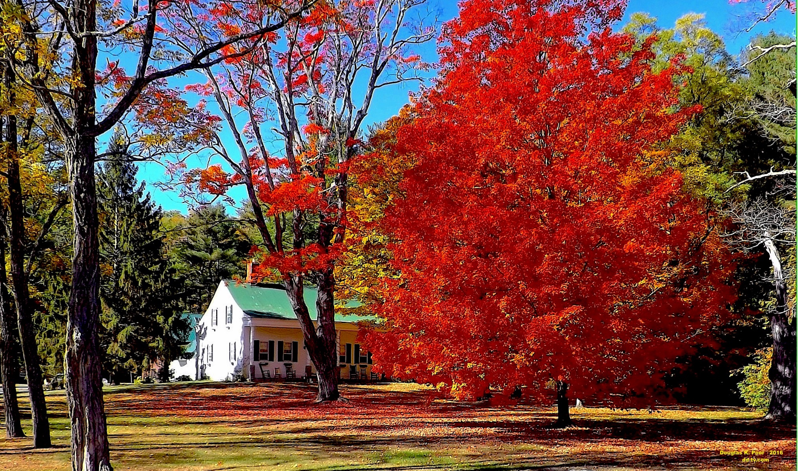 =================-O==========-RED-MAPLE-WHITE-HOUSE-smaller-size==========================================================================================================-RED-MAPLE-WHITE-HOUSE-smaller-size