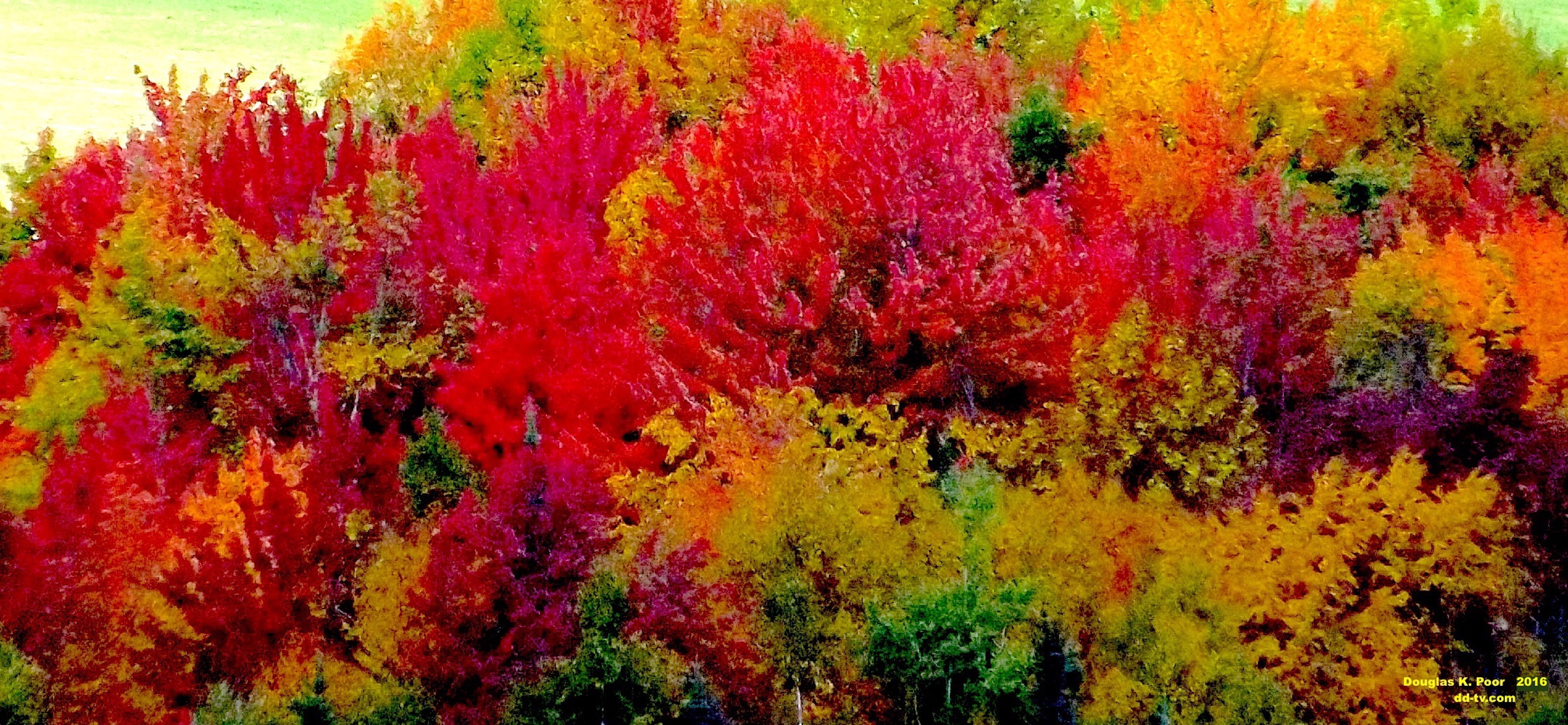 -----------============-SOFT-MIX-OF-FALL-FOLIAGE-COLORS-smaller-size================================================================================================================================================================-SOFT-MIX-OF-FALL-FOLIAGE-COLORS-smaller-size