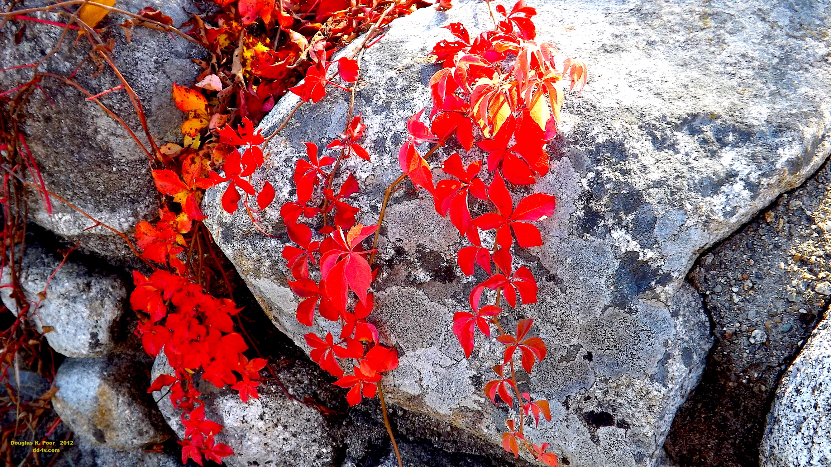 =================RED-FOLIAGE-ON-ROCK-smaller-size============================================================================================================================RED-FOLIAGE-ON-ROCK-smaller-size