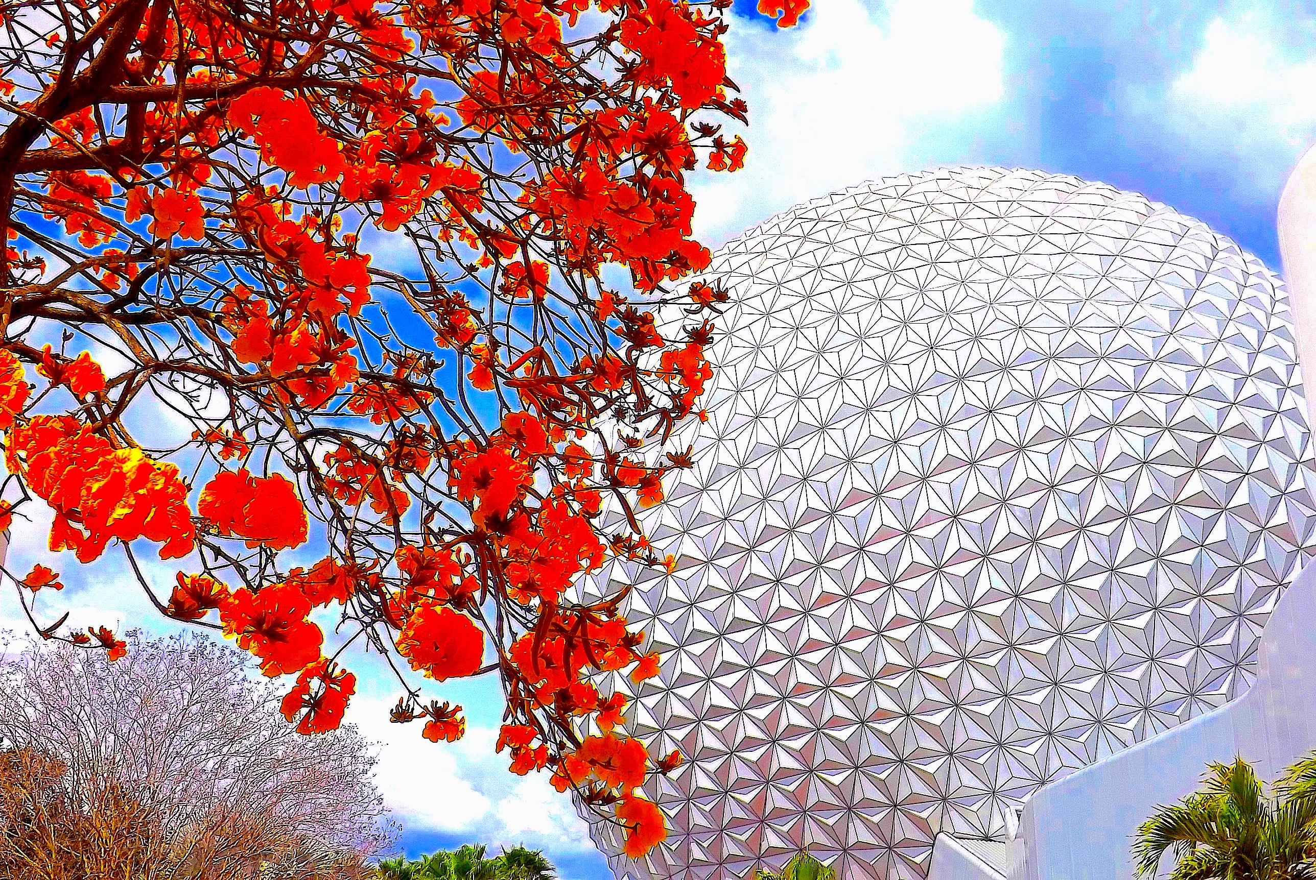 ====================YELLOW TREE FLOWERS AND SPACESHIP EARTH============================================================================================================================YELLOW TREE FLOWERS AND SPACESHIP EARTH