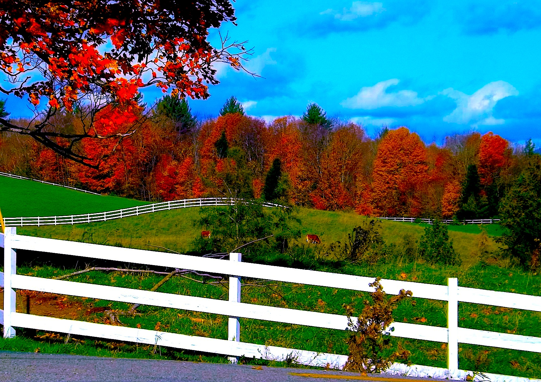 VT POSTCARD FALL FOLIAGE AND FENCES